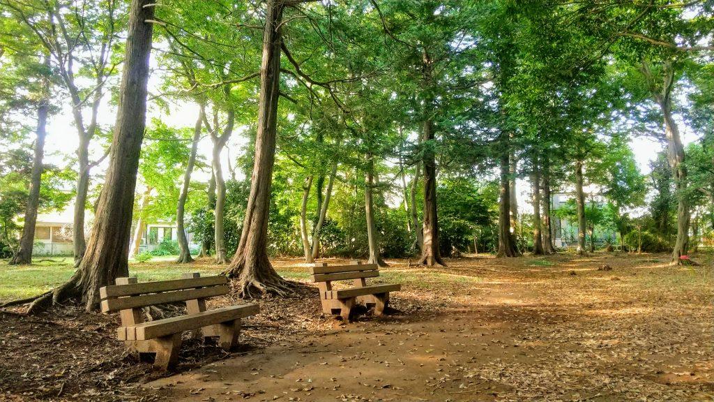 八千代小鳥の森風景(令和3年9月)